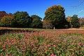 昭和記念公園 - panoramio (32).jpg