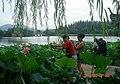 杭州. 曲院风荷(荷花展) - panoramio (1).jpg