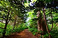 篠路五ノ戸の森緑地 (Green forest of Gonohe Shinoro) - panoramio.jpg