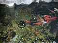 芝山嚴古蹟(士林區) - panoramio - Tianmu peter (57).jpg