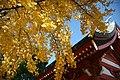 葛飾八幡宮 - panoramio (7).jpg