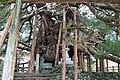 藤原のイブキ - panoramio.jpg