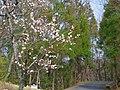 近つ飛鳥風土記の丘にて 2013.3.16 - panoramio (2).jpg