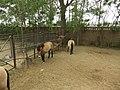 野马 - Wild Horses - 2011.05 - panoramio.jpg