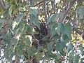 -2018-11-01 Birds nest, Trimingham, Norfolk.JPG