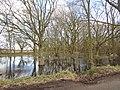 -2021-03-15 Pond, East Ruston Road, Honing (2).JPG