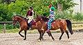 002 2012 05 27 Pferde.jpg