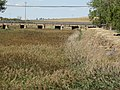 03 Castromocho de Campos Cauce rio Valdeginate Ni.jpg