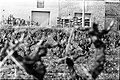05.03.76 Evènements à Narbonne, victime Emile POUYTES village de Arquette-en-Val (1976) - 53Fi697.jpg
