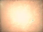 09-349.46.30 VMC Img No 12 (8268361499).png