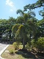 09930jfBinalonan Pangasinan Province Roads Highway Schools Landmarksfvf 06.JPG