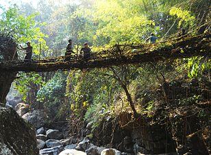Living Root Bridges Wikipedia