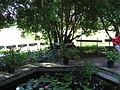 13 Zámek Veltrusy, kuchyňská zahrada.jpg