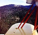 1948. Douglas-fir and white fir defoliation. Tupper area. Umatilla National Forest, Oregon. (33368486751).jpg
