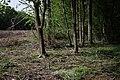 1 Waldrand NSG WAF017 Bergeler Wald.jpg