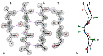 Beta sheet - An example of a 4-stranded antiparallel β-sheet fragment from a crystal structure of the enzyme catalase (PDB file 1GWE at 0.88 Å resolution). a) Front view, showing the antiparallel hydrogen bonds (dotted) between peptide NH and CO groups on adjacent strands. Arrows indicate chain direction, and electron density contours outline the non-hydrogen atoms. Oxygen atoms are red balls, nitrogen atoms are blue, and hydrogen atoms are omitted for simplicity; sidechains are shown only out to the first sidechain carbon atom (green). b) Edge-on view of the central two β-strands in a, showing the righthanded twist and the pleat of Cαs and sidechains that alternately stick out in opposite directions from the sheet.
