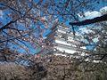 20130428 鶴ヶ城.jpg