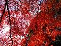 2014-11-24 Sekiganji 石龕寺 DSCF4558.jpg
