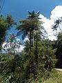 20140202 Parque Nacional de Itatiaia (1).JPG