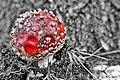 2016 366 292 Magic Mushroom (29786814473).jpg