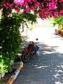 35846014 - panoramio.jpg