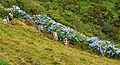 Açores 2010-07-20 (5071929123).jpg