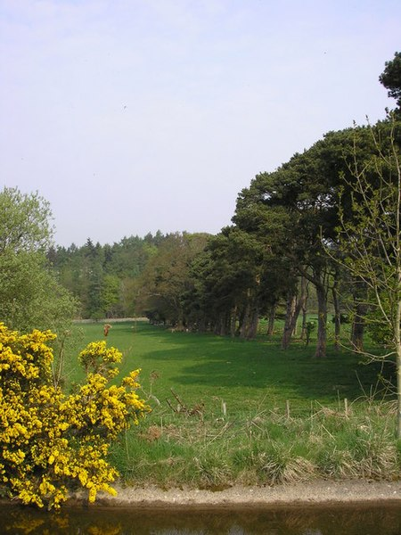 File:A Stand of Scots Pines on Philip Haugh - geograph.org.uk - 795774.jpg