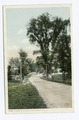 A Street View, Alton Bay, Lake Winnipesaukee, N. H (NYPL b12647398-68954).tiff