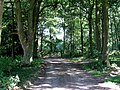 A Track Into South Wood - geograph.org.uk - 211633.jpg