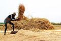 A farmer.jpg