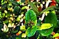 A magia das vegetações do meu Sergipe. 12.jpg