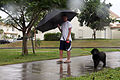 A resident of U.S. Marine Corps Base Camp Smedley D. Butler in Okinawa, Japan, walks his dog through winds and rain brought by Typhoon Chaba Oct. 28, 2010 101028-M-VG363-108.jpg