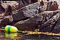 Acadia 2012 08 23 0284 (7958575916).jpg