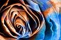 Acrylic Rose Macro - Hybrid HDR (11957560396).jpg