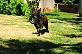 Action dog.jpg