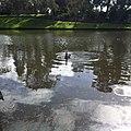 Adelaide SA 5000, Australia - panoramio (11).jpg