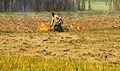 Agriculture field preparation 1.JPG