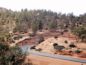 Mediterranean woodlands and forests - Al Bakour escarpment, Jebel Akhdar, Libya.