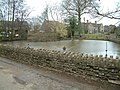 Alderton Duck Pond, with Black Swan - geograph.org.uk - 123913.jpg