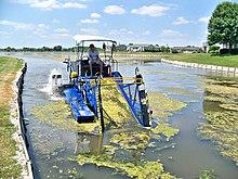 Algae - Wikipedia
