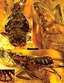 Alicodoxa rasnitsyni holotype Figs 1-3.jpg