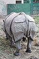 Alipore Zoological Garden - Kolkata 2011-01-09 0111.JPG
