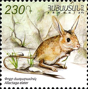 Small five-toed jerboa - Allactaga elater on a 2012 Armenian stamp
