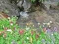 Along dead horse creek (ffd0b514f8aa4cd5bf0d5399c1cd245c).JPG