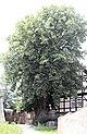 Alterode (Arnstein), Pfarrhof mit Linde.jpg