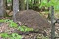 Ameisenhaufen bei Speicherz.jpg