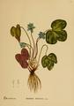 American Medicinal Plants-1-0025.png