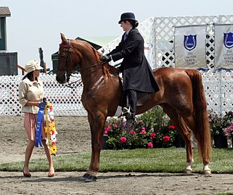American Saddlebred - An American Saddlebred and rider in saddle seat tack and attire.