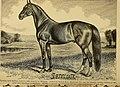 American horses and horse breeding (1895) (18122539676).jpg