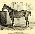 American horses and horse breeding - a complete history of the horse from the remotest period in his history to date. The horseman's encyclopedia and standard authority on horses, embracing breeds, (14781807141).jpg